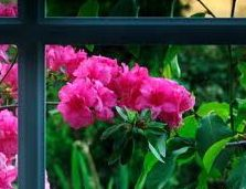 FlowersThruWindow10-9-12-1